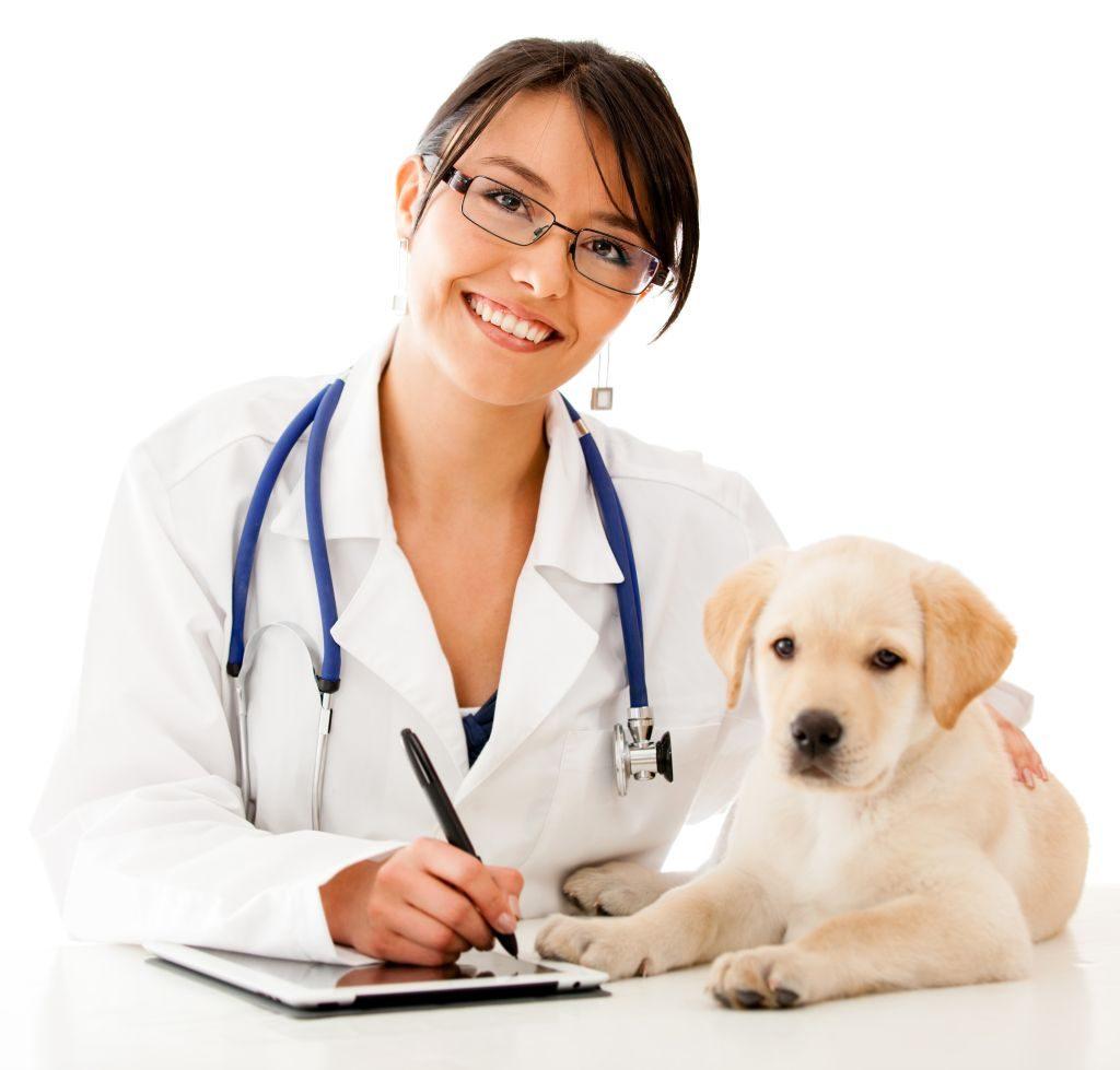serviços de um veterinário